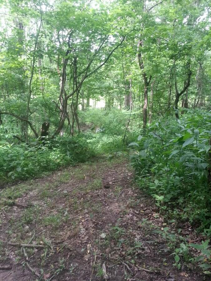 Jungle Walk Prep